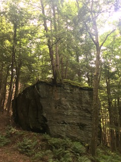 Allegheny Forest