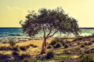 beach-beautiful-grass-358418